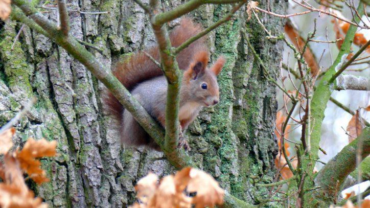 Onze buurman de eekhorn